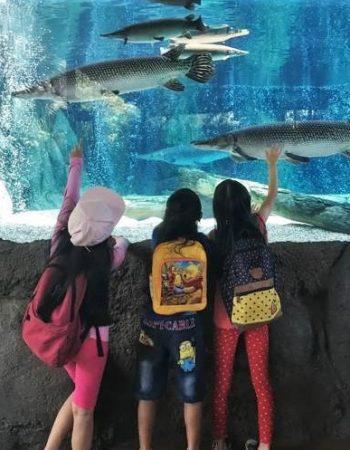 River Safari Fishes